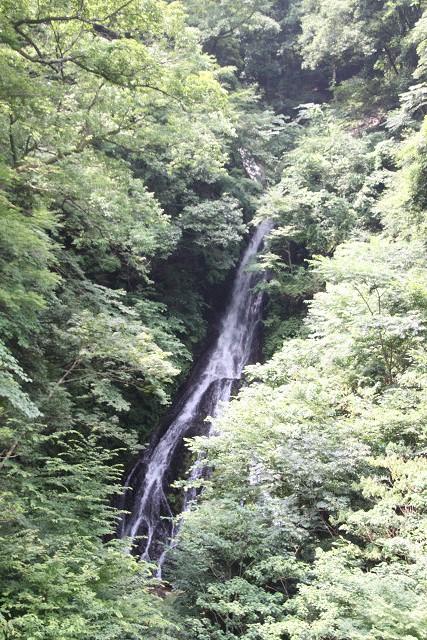 途中「大沢の滝」も観賞しました