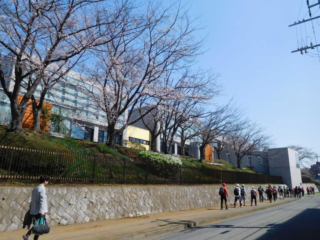 劇団四季芸術センター前の桜を眺めながらウォーキング