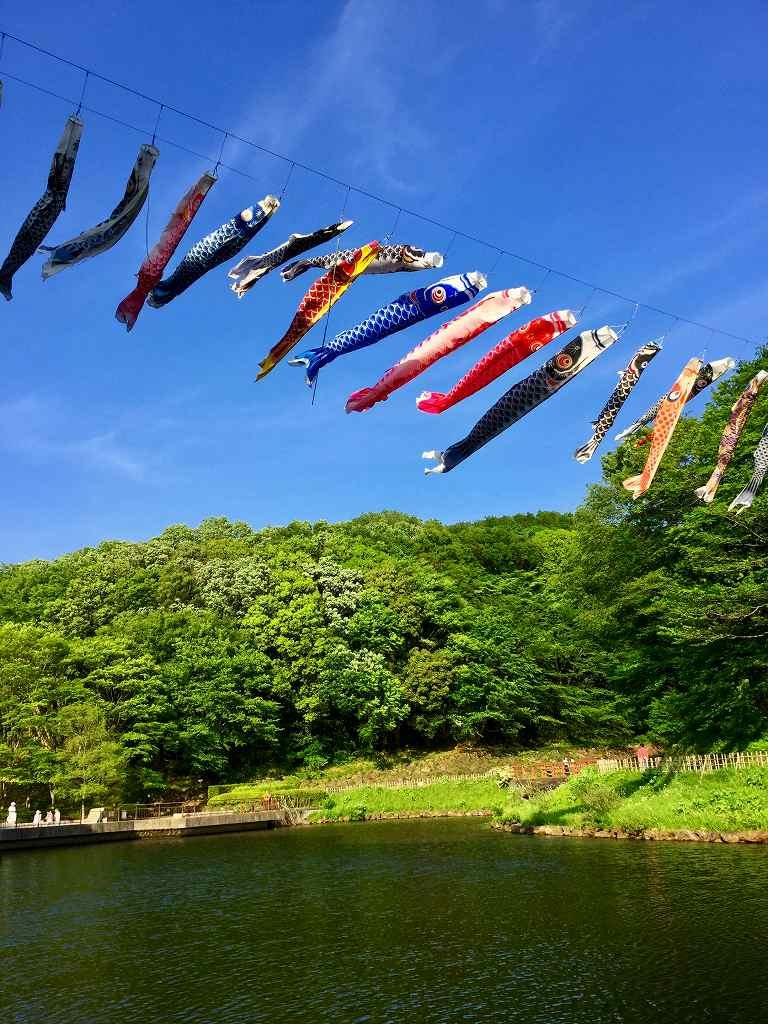 四季の森公園 鯉のぼり