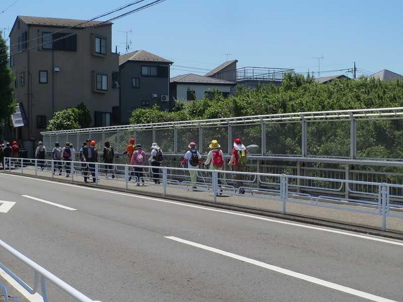 東名高速道路上の橋上をウォーキング見事に1列!!