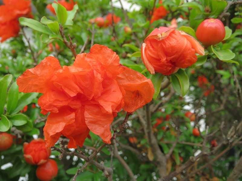 同じ隣宅の赤い花 何という花でしょう知っている人教えて下さい