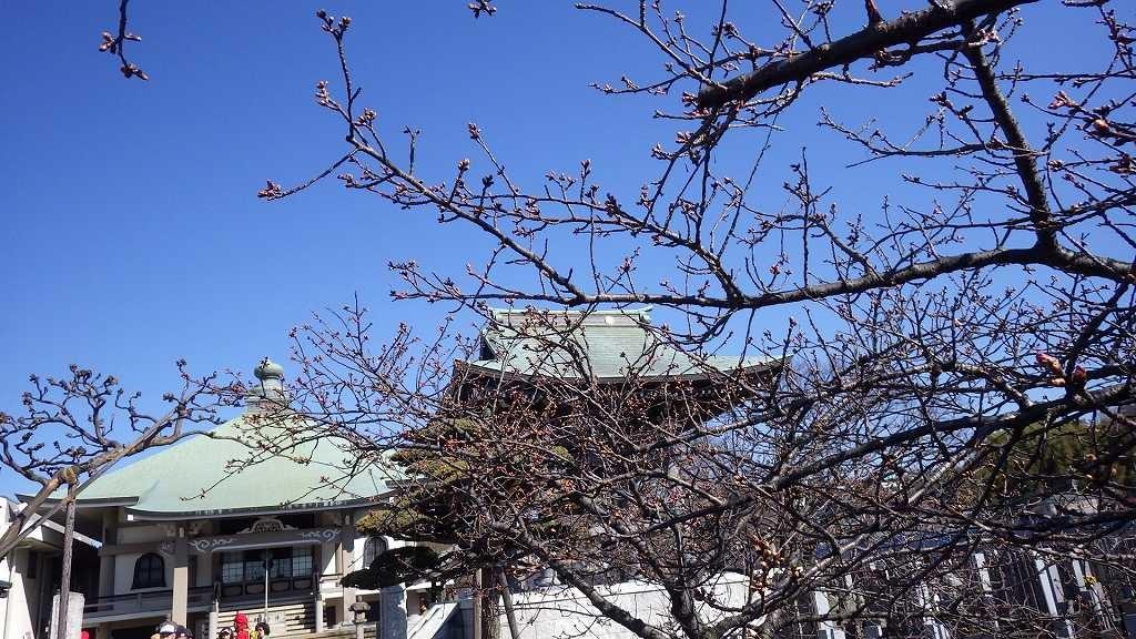 観護寺のご厚意でトイレ休憩、お寺の梅は未だ数輪しか咲いて無い
