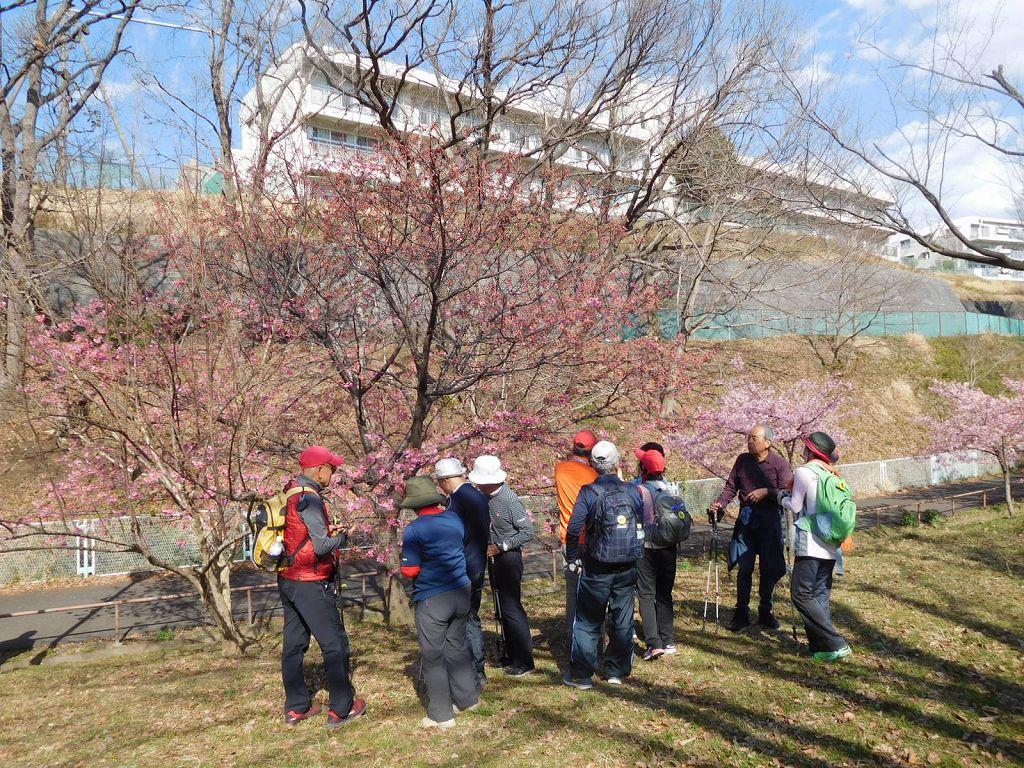 変わった桜花に集まっています