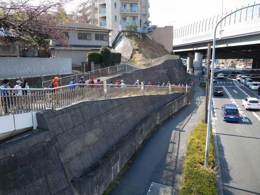 江田駅前の有名な一本桜 大島桜?もほころび始めています
