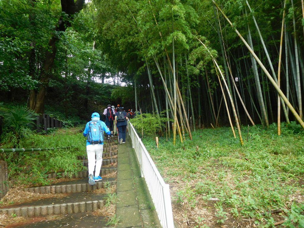 大塚・歳勝土遺跡公園を滑り転倒に注意しつつ慎重に歩く