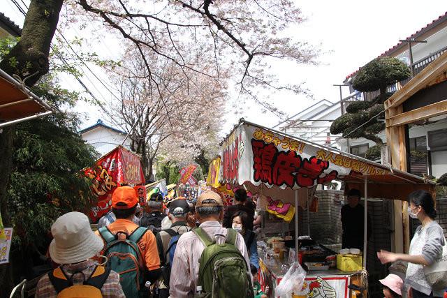 弥生神社は桜祭りで賛同は大混雑