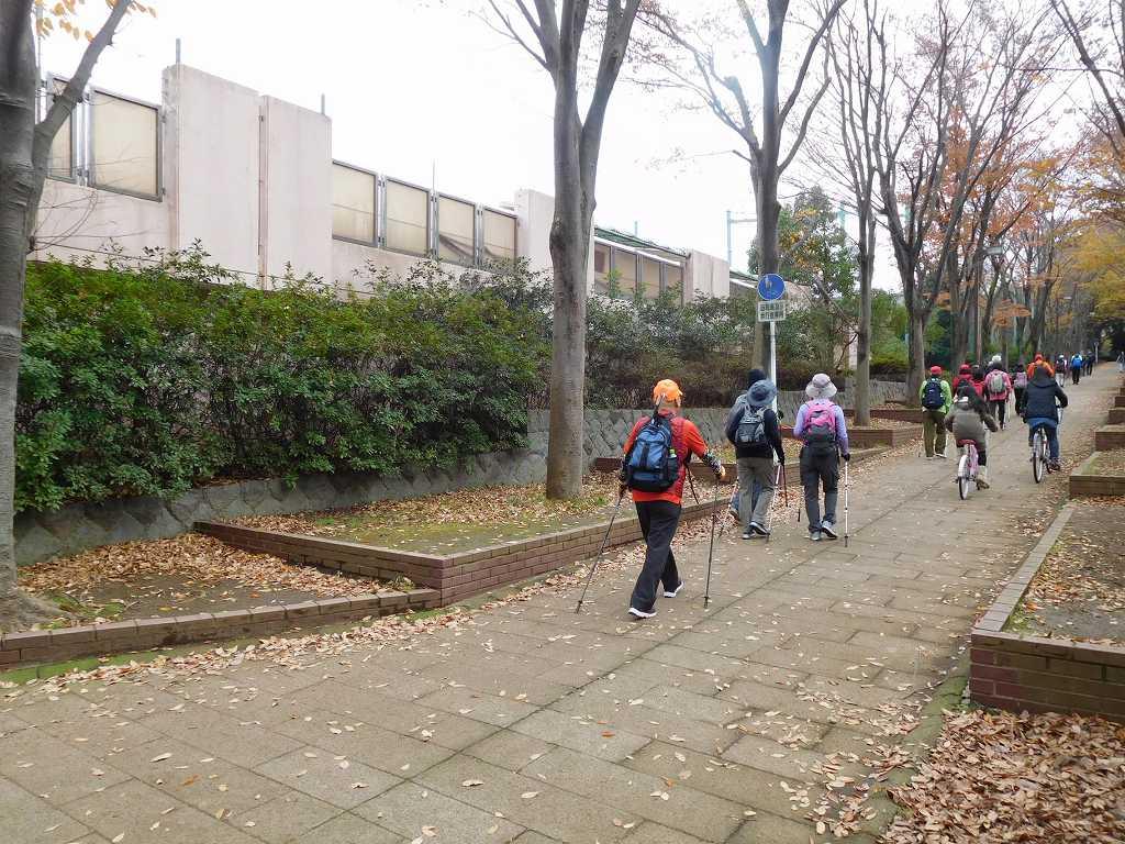 荏田南中学校の横の樹木 やや遅い時期ですがまだまだ見れます