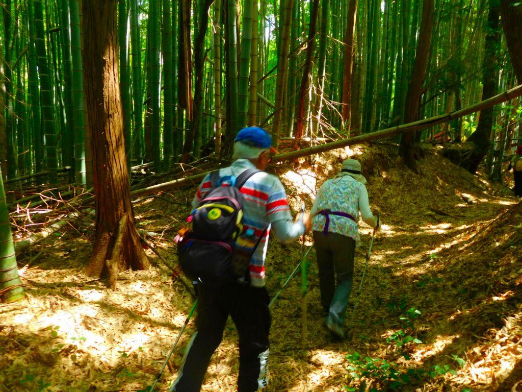 竹の自然倒木? して道路を塞いでます