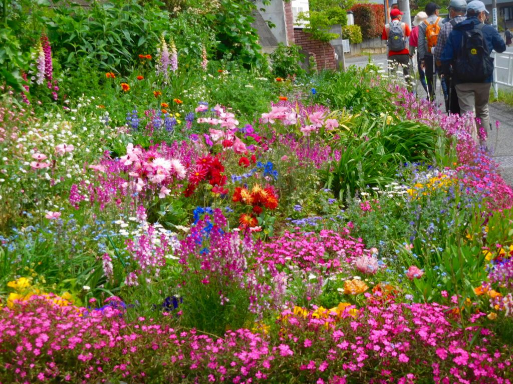 市ヶ尾町の花愛好家の花壇 何時もお花一杯です