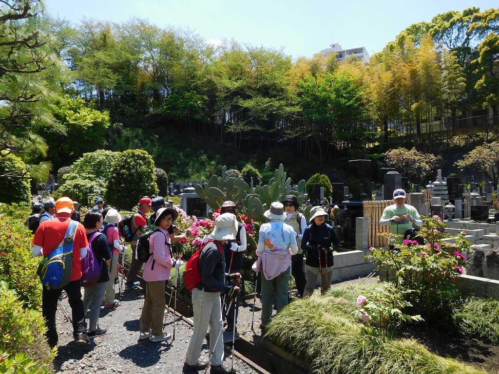 正覚寺の牡丹を観賞