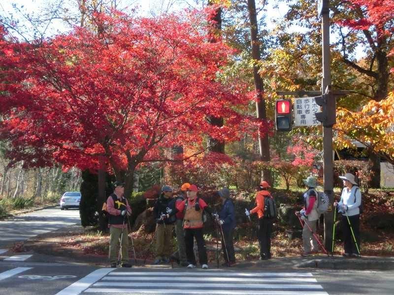 紅葉の綺麗な交差点で信号待ち