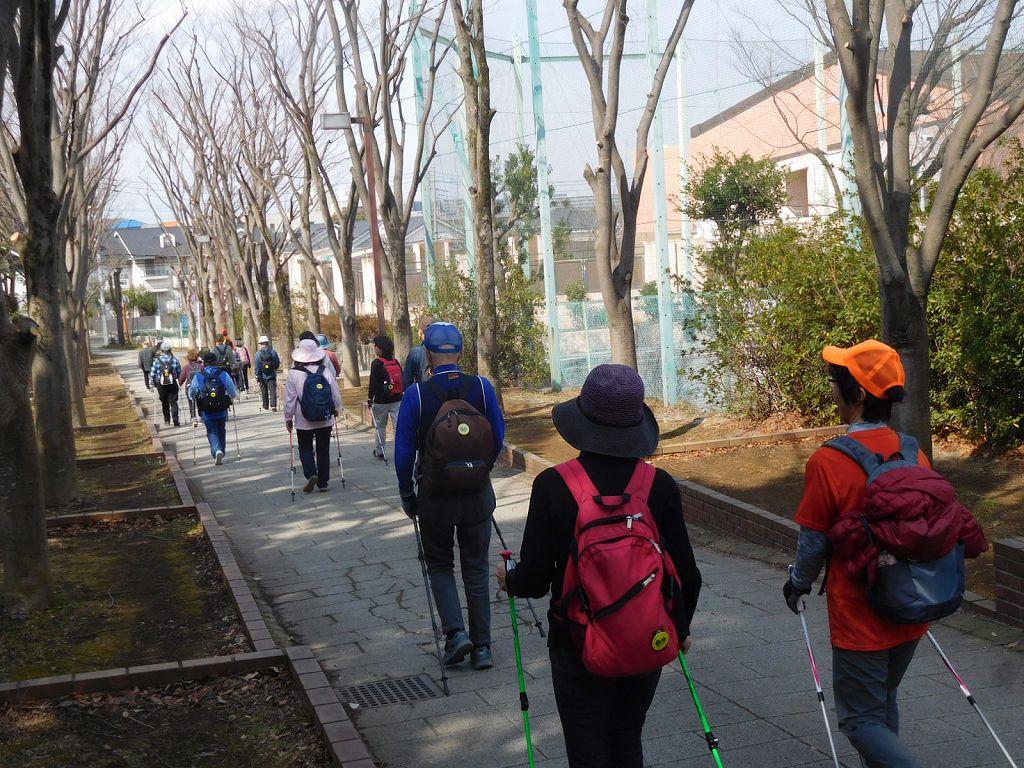 荏田南中学校横の街路樹は落葉して丸裸状態で寒そう