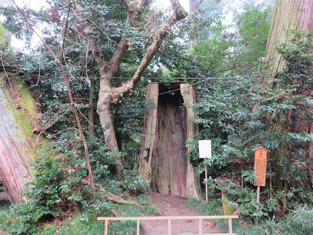 香取神宮の由緒ある三本杉