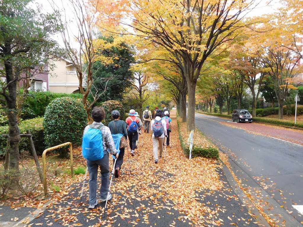 欅の黄葉を楽しみ、落葉を踏みしめて歩く