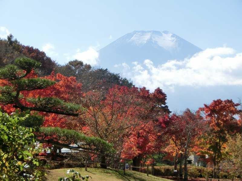園内からの富士山と紅葉