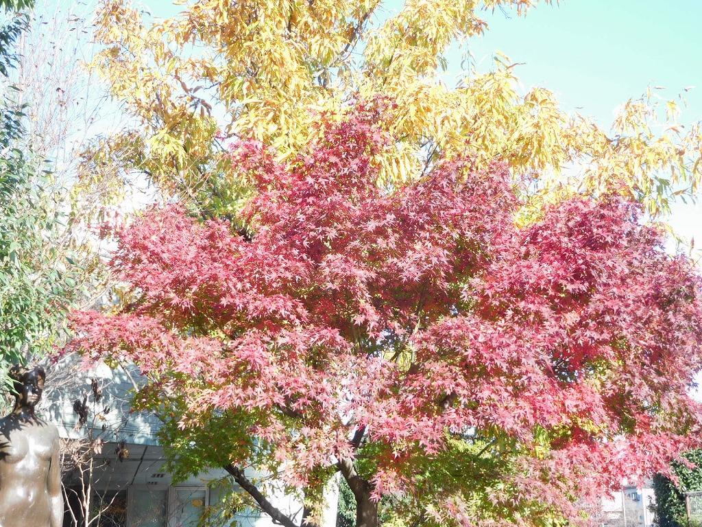 青葉区役所内の紅葉も綺麗です