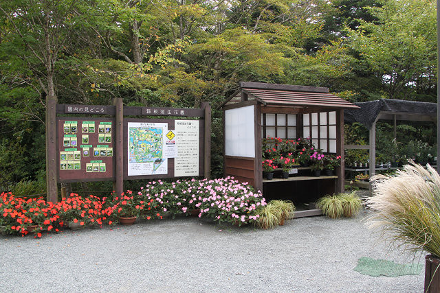 「箱根湿生花園」入口には色とりどりの花が歓迎してくれました