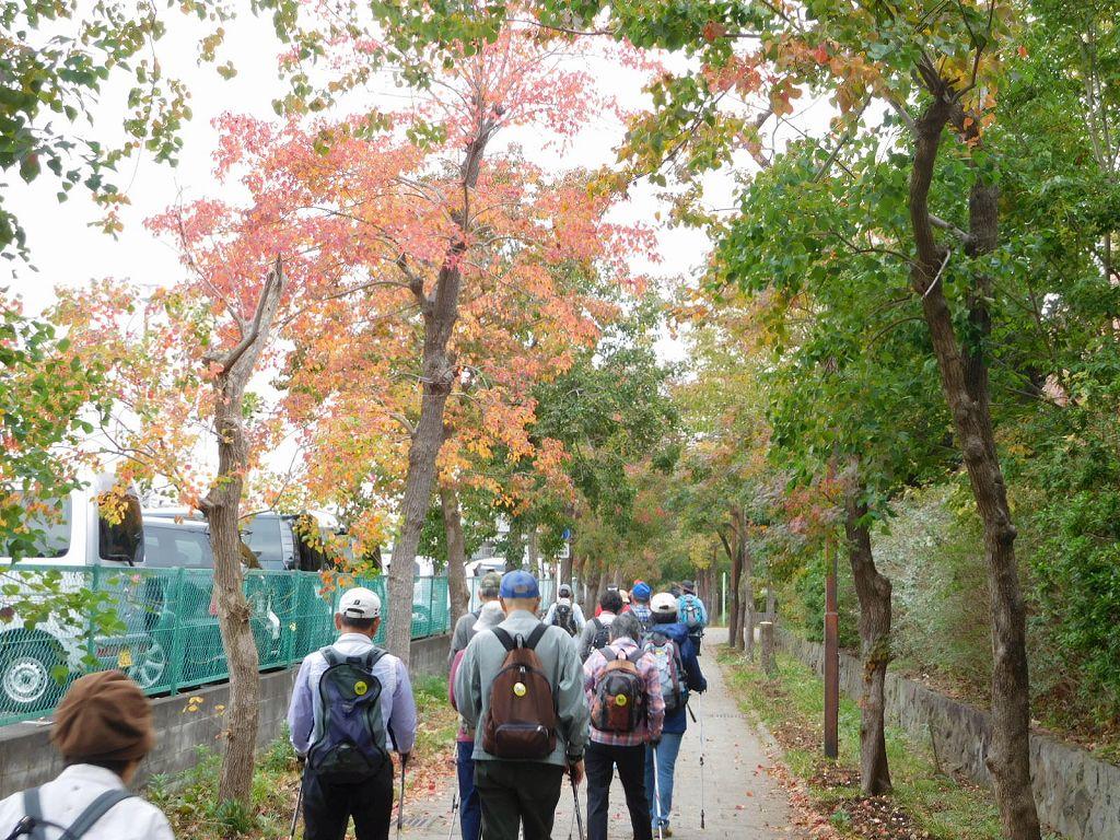 荏田南小・中学校横のナンキンハゼは紅葉しています