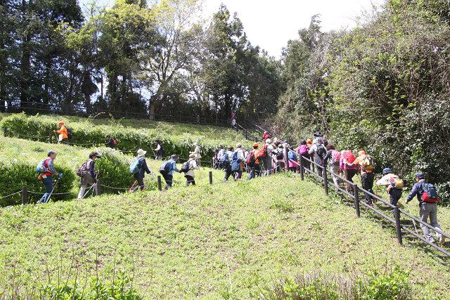 小山田緑地内を階段組・坂道組に分かれて歩く