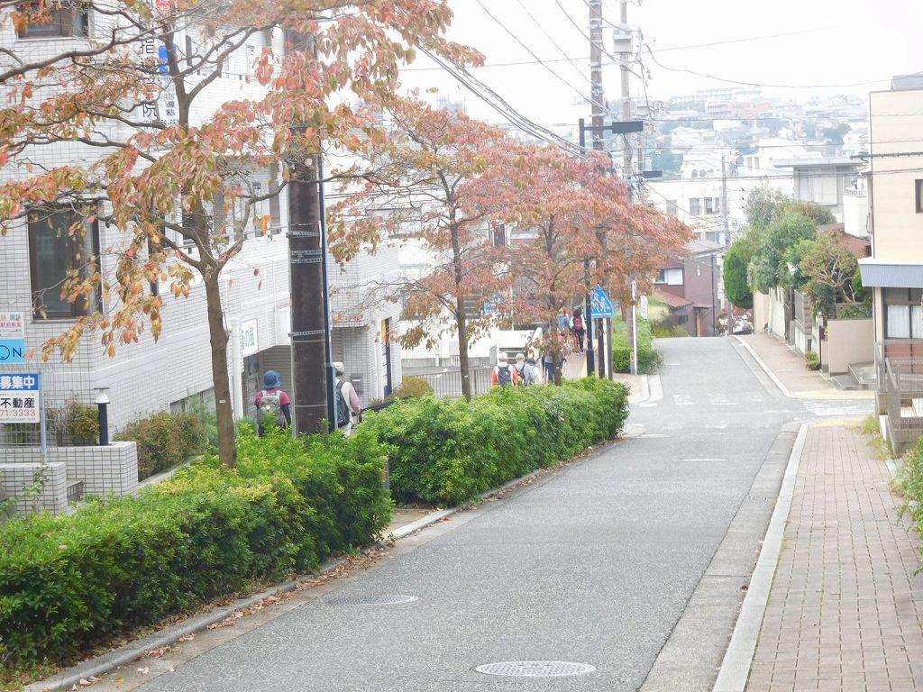 お魚広場から区役所へ行く道 紅葉が始まっています