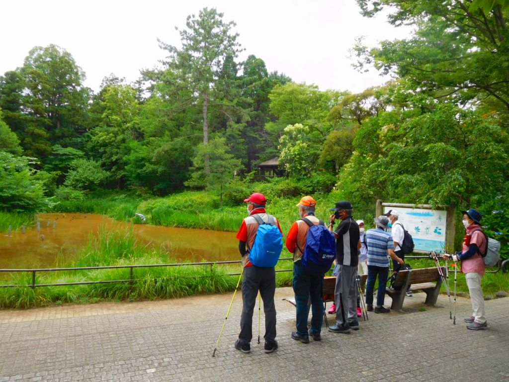 池の水がなんと茶色になっています、その上をカルガモ親子が・・・
