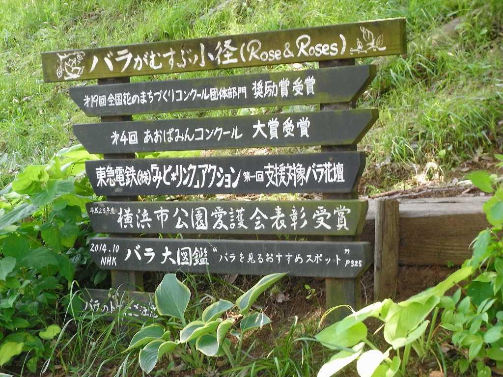 各種表彰された荏子田のバラ園に到着です