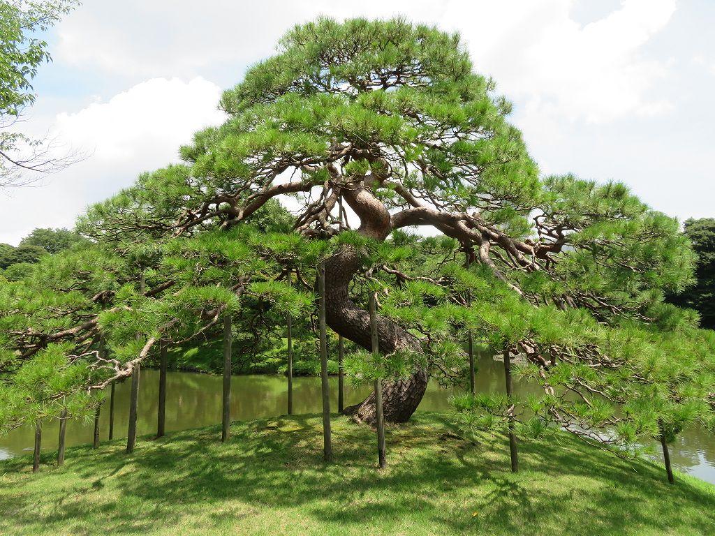 琵琶湖畔の景勝地唐崎の松を模したものと言われる「一つ松」