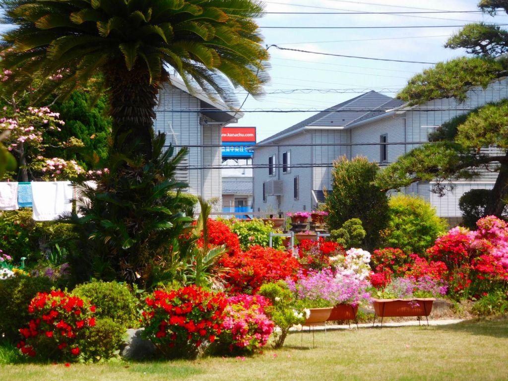 美しい花な囲まれた民家の庭