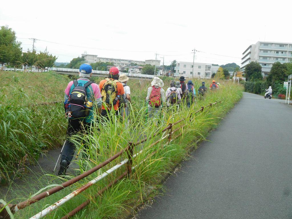 青葉区役所をスタートして鶴見川を歩きます 雑草の背が高いです