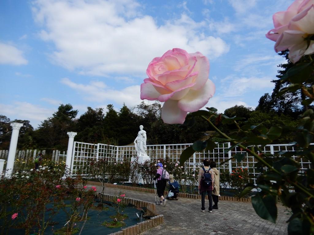 青空と白い雲に薄桃色のバラが映えます