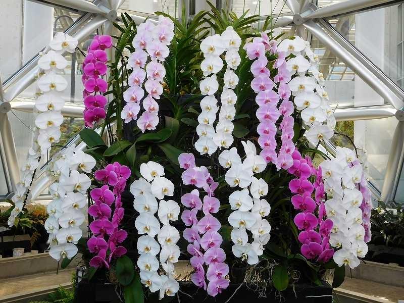 温室には胡蝶蘭や見たことの無い多肉植物の花が沢山咲いていました