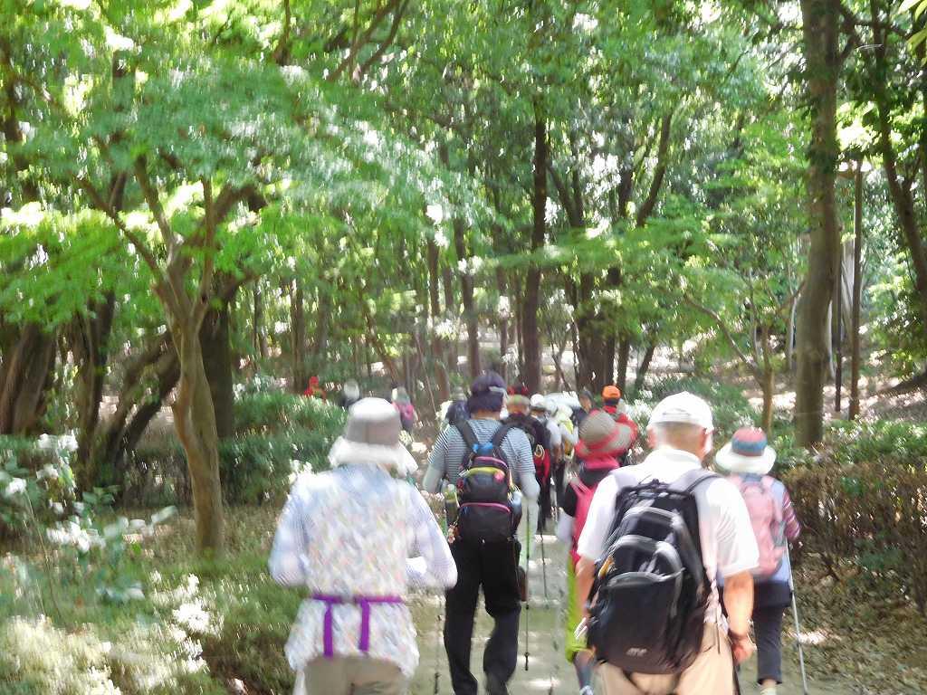 鴨池公園から葛が谷公園へ向かう