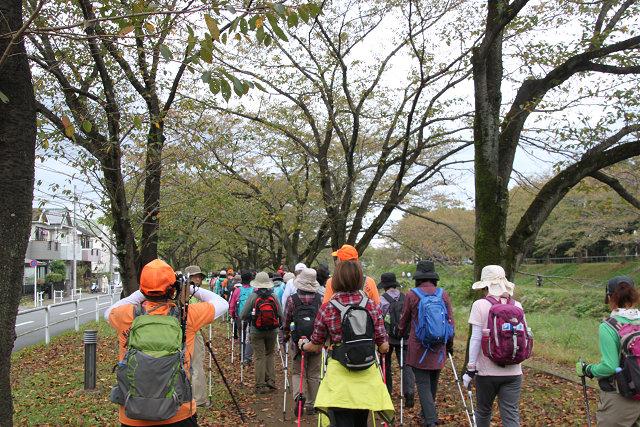 浅川遊歩道の桜並木 桜時期に来たいとの声も上がっています