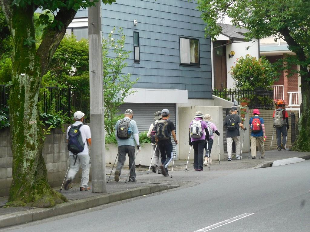 あざみ野三丁目桜並木をウォーキング