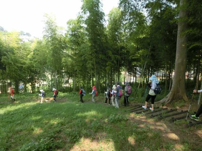 竹林横に眺めつつウォーキング