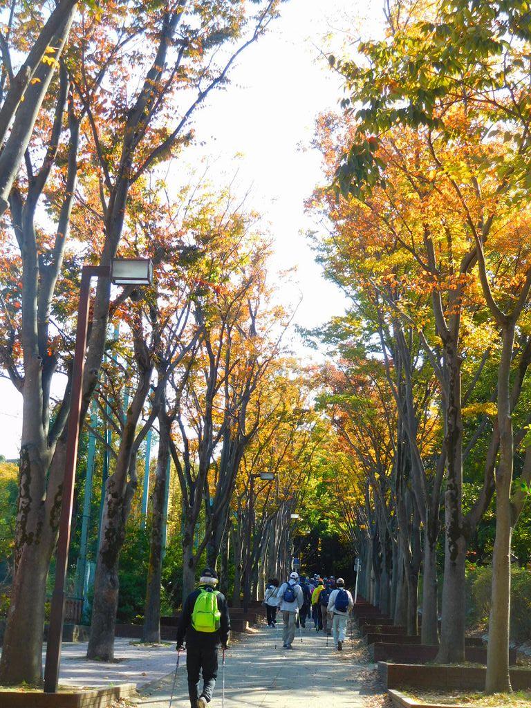 荏田南中グランド横の黄葉の下も綺麗です