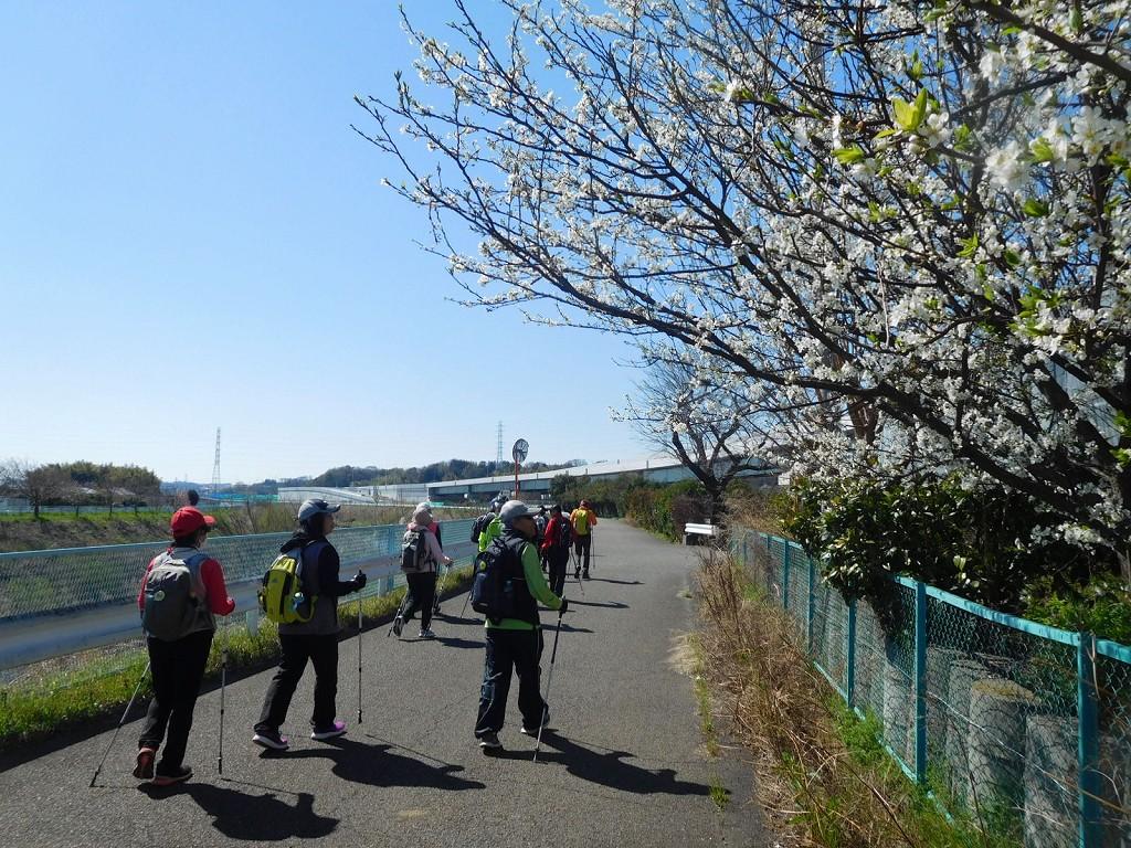 谷本公園でWUの後 鶴見川沿いに出てウォーキング 白い花の名は?