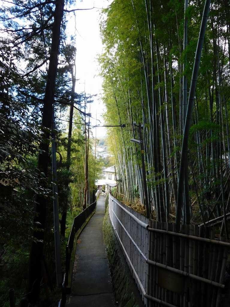松永記念館入口の竹林。風情が有りますね