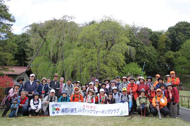 鶴蒔西公園の枝垂れ桜の大木の葉桜をバックに集合写真 皆さん残念そう