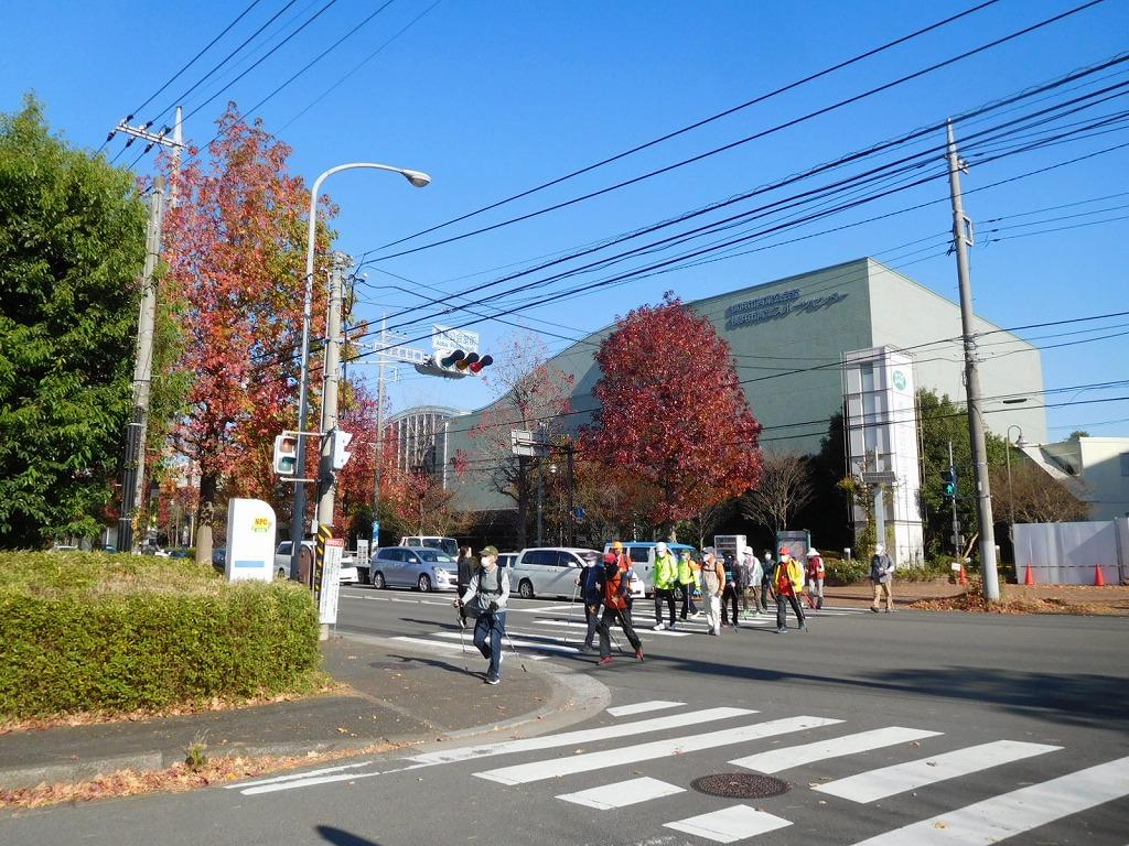 区役所通りの紅葉も見事です