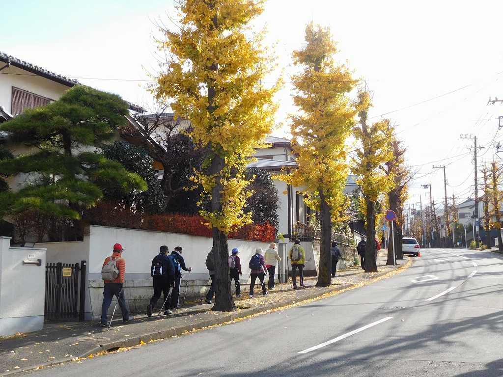 黄葉の残る市が尾町住宅街をウォーキング