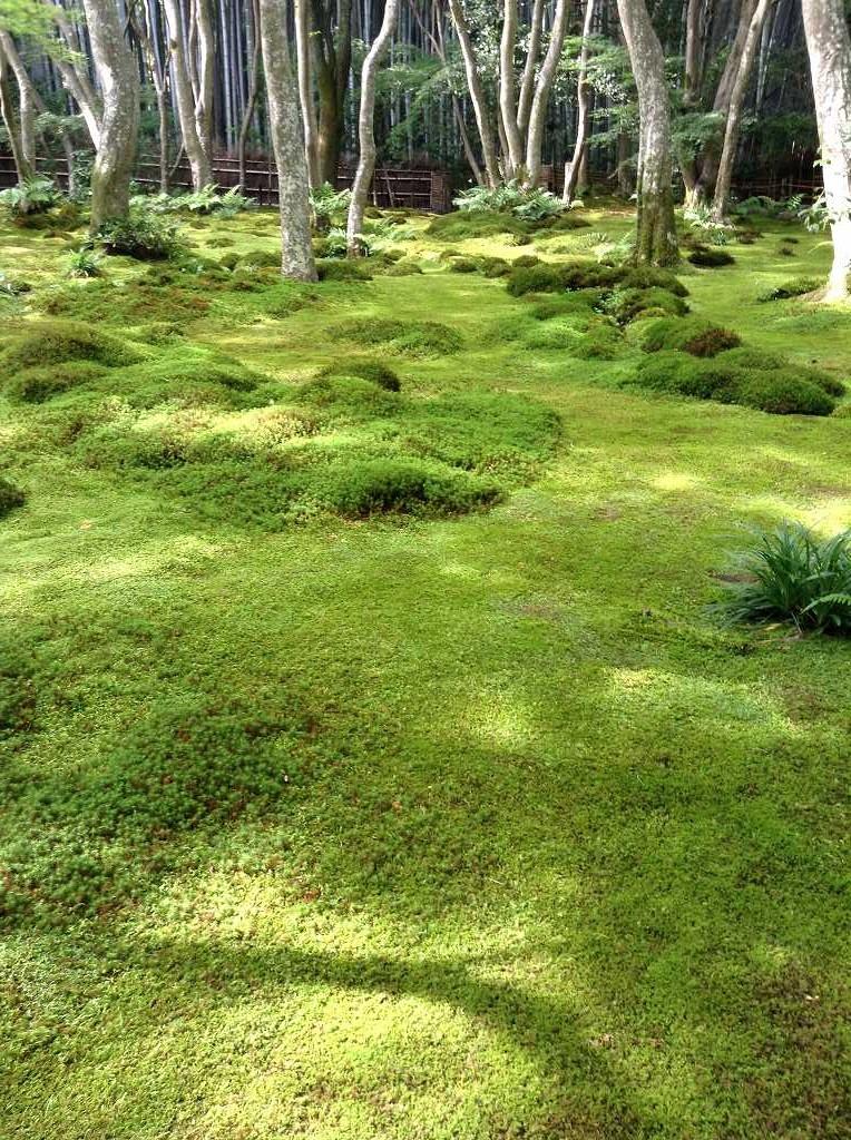 嵯峨野 祇王寺の苔庭 東山画伯はこの庭から着想し「行く春」を描いた