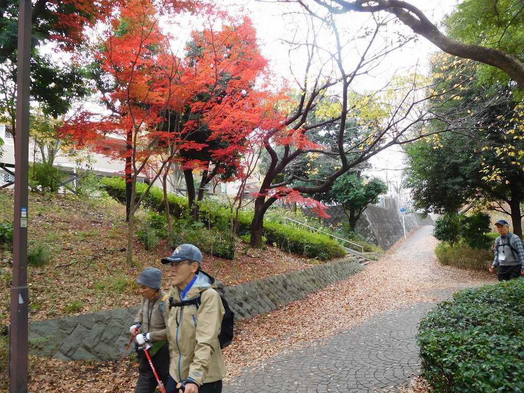 鴨池公園の紅葉 鮮やかな紅葉ですね