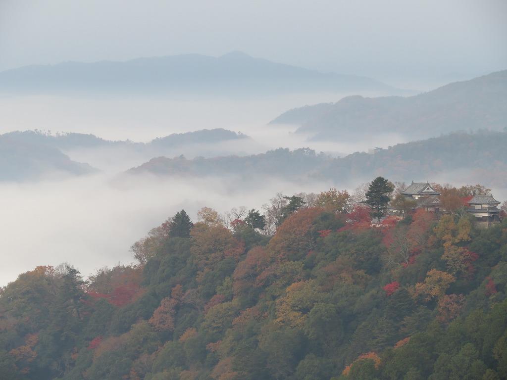 展望台から 雲海に浮かぶ城