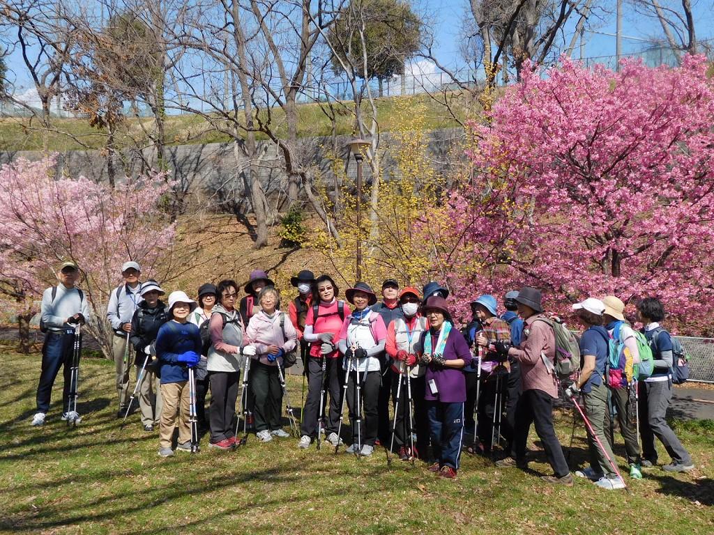 河津桜の下へ美女が集まりましたよ