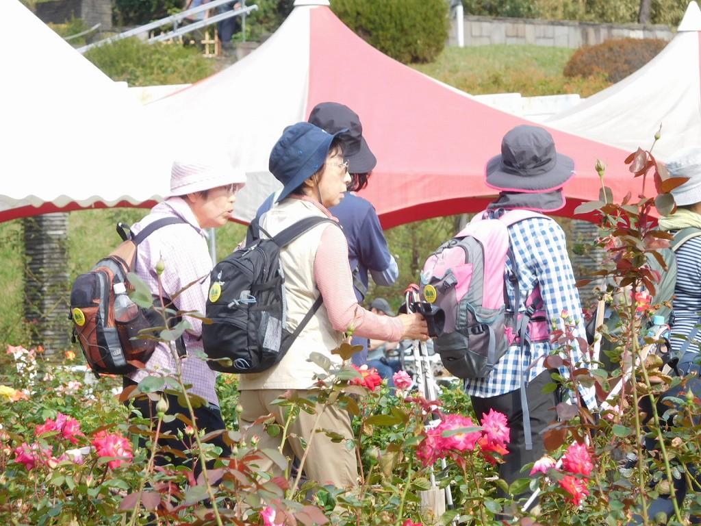 女性群も沢山のバラを見て、好みの花を探しています