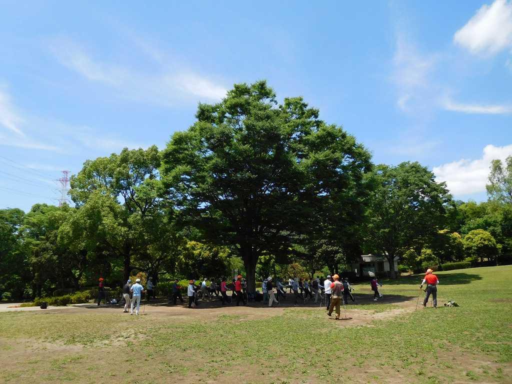 「この樹なんの樹気になる樹」のように大きな樹の木陰でクールダウン
