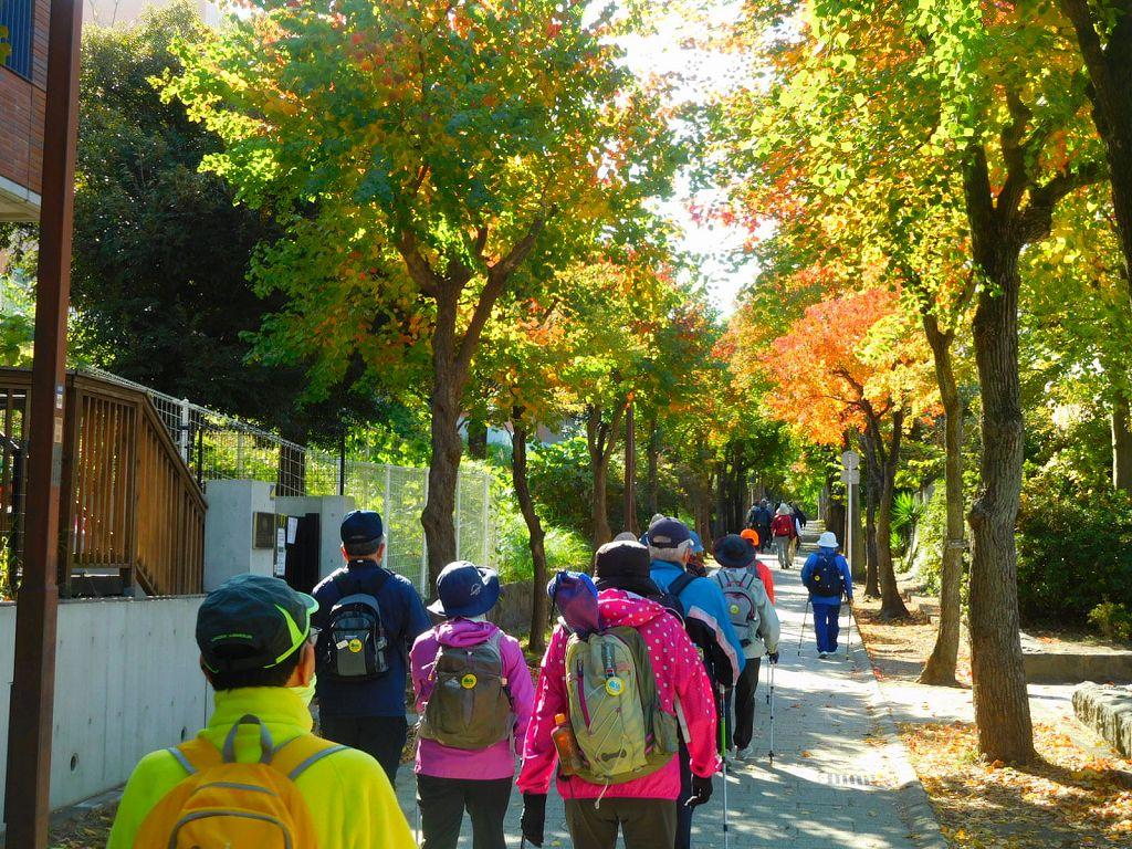 荏田南小・中学校裏遊歩道の黄葉の下を歩く