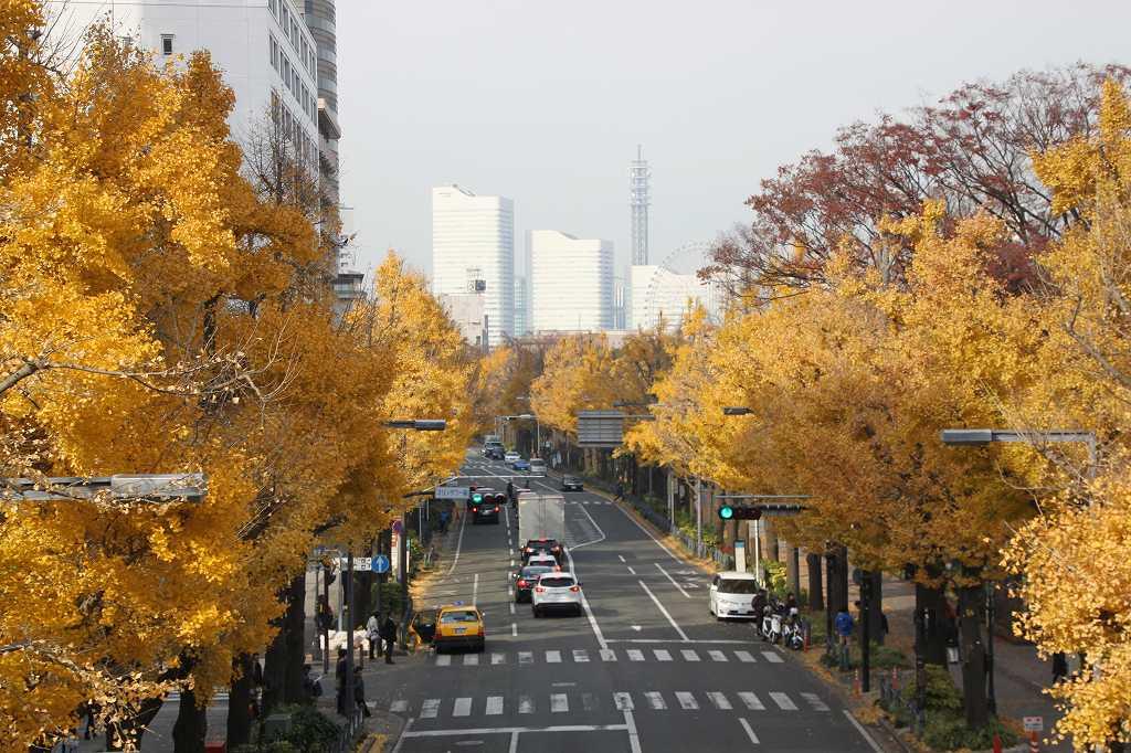 同じく山下橋からの黄葉 いづれも見事な黄葉でした