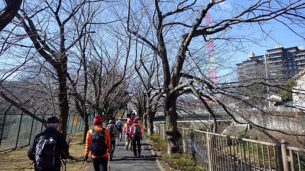 成瀬桜ロードをウォーキング。満開の時に又集まろうとの約束を交わす